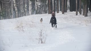 Longhaired female rider wild and fast riding black horse through the snow, dog running nearby, slow-motion
