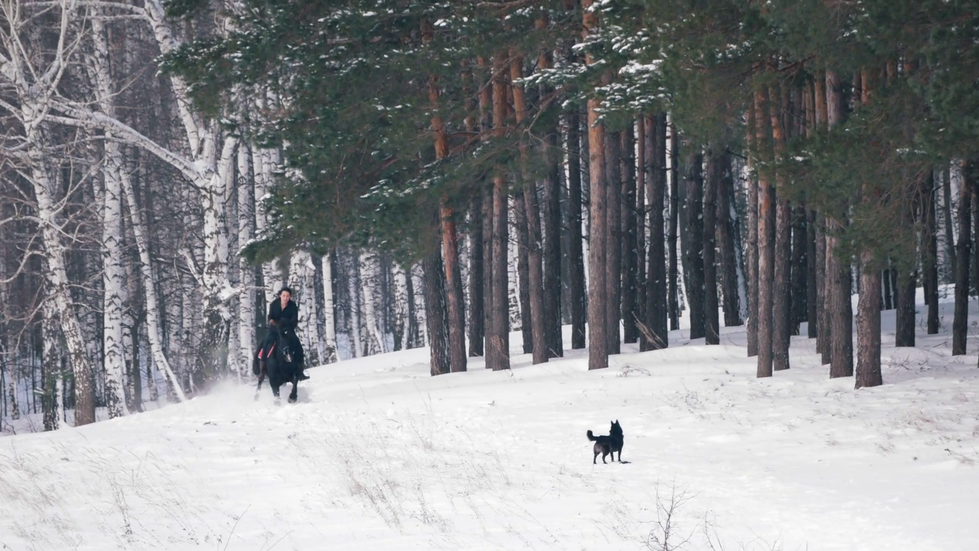 Longhaired Female Rider Wild And Fast Riding Black Horse Through The Snow Dog Running Nearby Stock Video Footage Storyblocks