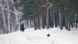 Longhaired female rider wild and fast riding black horse through the snow, dog running nearby