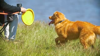 Male hand playing with dog in frisbee outdoors