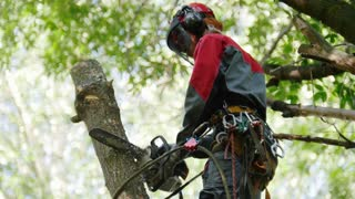 Man sawing wood chainsaw, chips flying in the air