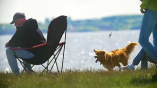 Man sitting on camping chair in front of dog running on the grass outdoors