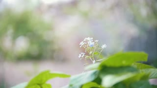 Small flower on the background of falling from cherry petals, blurred, slow-motion