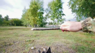The dog grabs a stick from the owner's hands. First-person view. Slow motion