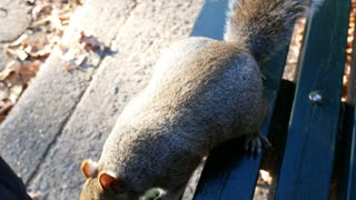 The squirrel is asking the food, pov