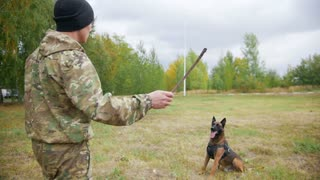 Trainer throws up the stick and trained sheepdog catches it