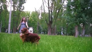 Two dog playing outdoors with his owner - pregnant woman - irish setter and husky, slow motion
