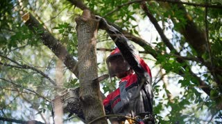 Unknown man in a helmet and uniform stands on a high branch and saws a chainsaw log