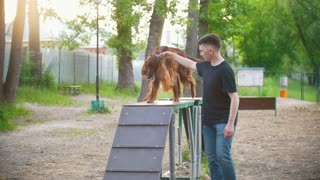 Young man handler trains the dog breed irish setter on the overpass in summer park