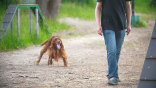 Young man playing with funny irish setter on playground at summer park