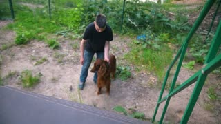 Young man trains his dog - irish setter climbs the stairs