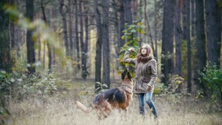 Young pretty attractive woman with red hair playing with her pet - german shepherd - walking on a autumn forest - the dog searches for a thrown stick, slow motion