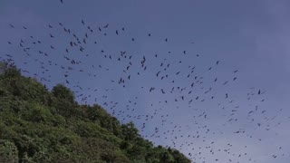 Flying foxes island Boracay.Bats fly over the jungle and mountains.