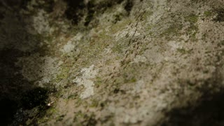 Group of ants moving in the jungle along the stone wall. Ant road, track