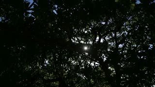 Sunlight through tree leaf in sunny day. Sun rays shining through trees
