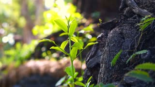 abstract new life growing. Tree sprout from old trunk. Green natural background