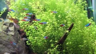 Aquarium with tropical colourful fish