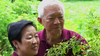 Asian senior couple looking after chili tree in their herb garden