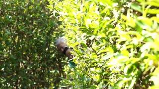 Asian senior couple smiling in the garden behind green bush