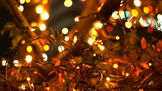 Close up tree with holiday light illumination in red, white and yellow colour