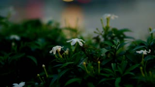 Flowers with blur light and river reflection