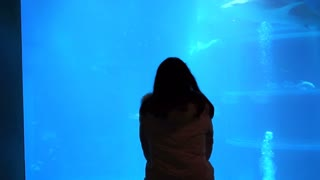 Girl silhouette watching fishes and whale shark at aquarium