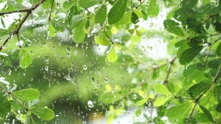 Green lush leaves nature in tropical rain, rainy season