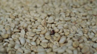 HD 1080 Raw white coffee beans close up
