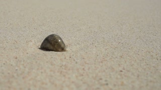 Hermit crab shell next to the white sand crystal blue ocean of Thailand