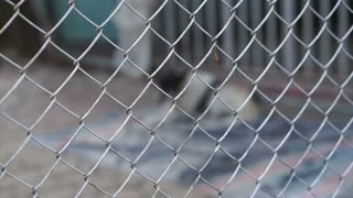 Injured stray dog blur behind fence, abandon concept