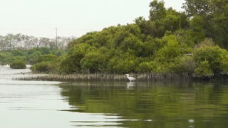 Mangrove forest in Anping, Taiwan nature with birds
