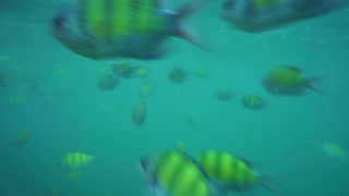 Ocean snorkeling point of view with fishes in blue green sea