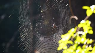 Perfect spider web in the forest in morning sun light