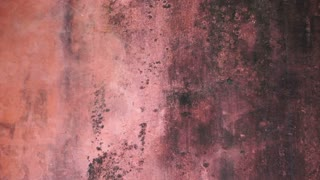 red old mold wall texture background