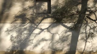 Shadow of Japanese pine tree casting on castle wall abstract peace and history