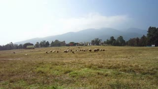 Sheep farm next to the cloudy mountain