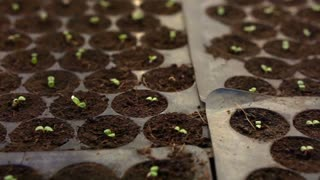 small farm salad vegetable planting at night with house lighting