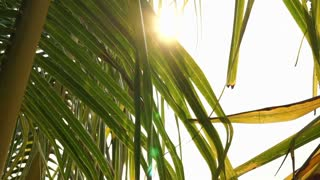 Sun ray shining through palm leaves in the morning