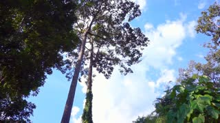 Tall trees in tropical high mountain forest
