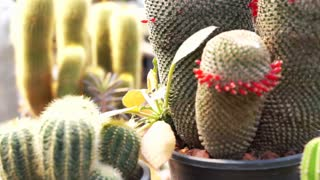 The Garden of Cactus & Succulent plants