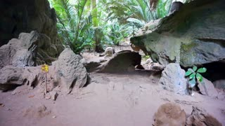 Tropical Jungle cave and rocks with lush trees