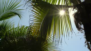 Tropical paradise palm tree and sun light in breeze