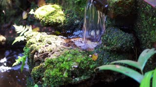 tropical small garden. Beautiful moss cover on rocks and waterfall