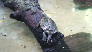Turtle walking on log near water