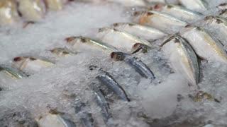 Variety Fresh Fish at the market on ice