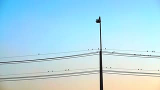 Vertical electric pole and flock of birds sitting on horizontal wires with colourful sky sunset