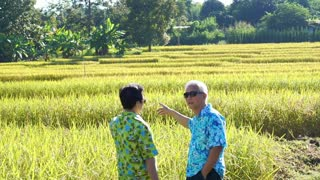 Video Asian senior couple walking and looking along rice field. Looking at nature and agriculture business