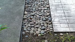 Video Garden pathway materials, pebble, concrete and stamped cement with grass