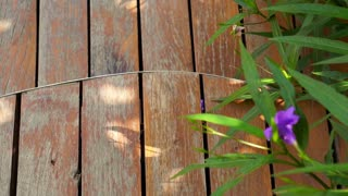 Video of Curved cut wooden deck in the garden