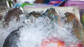 Video of Fish Frozen In Ice At Market